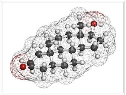 Slang 5-Alpha Reductase Type 2 Deficiency